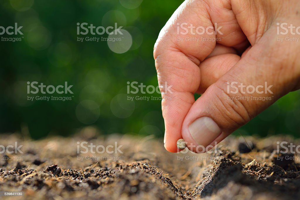 Farmeru0027s Hand Planting Seed In Soil Stock Photo