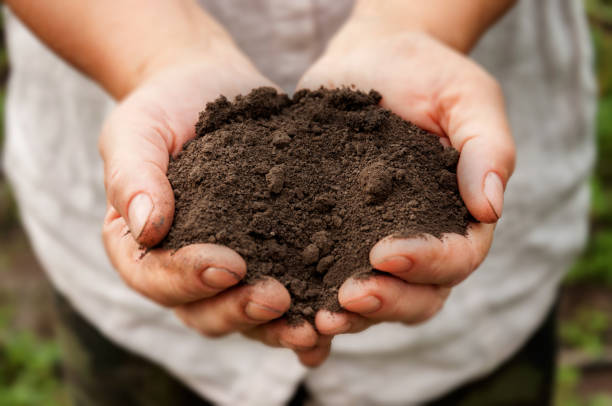 Farmer's hands hold a pile of fertile land in the garden. Farmer's hands hold a pile of fertile land in the garden. handful stock pictures, royalty-free photos & images
