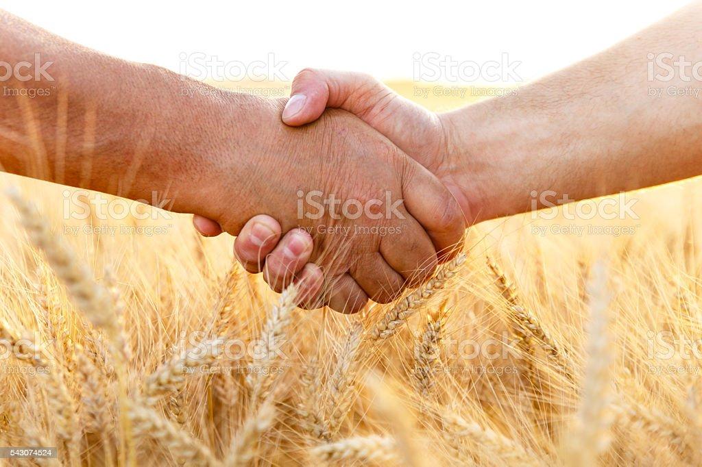 Farmers handshake over the wheat corp stock photo