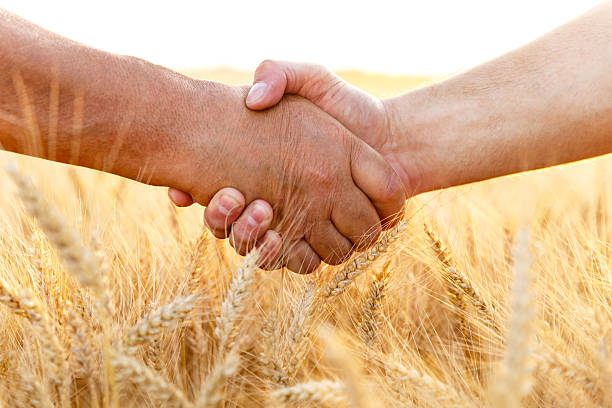 Farmers handshake over the wheat corp Farmers handshake over the wheat corp, close up. rancher stock pictures, royalty-free photos & images