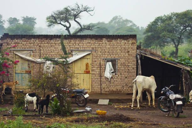bauernhaus in indischen landschaft - ziegenhof stock-fotos und bilder