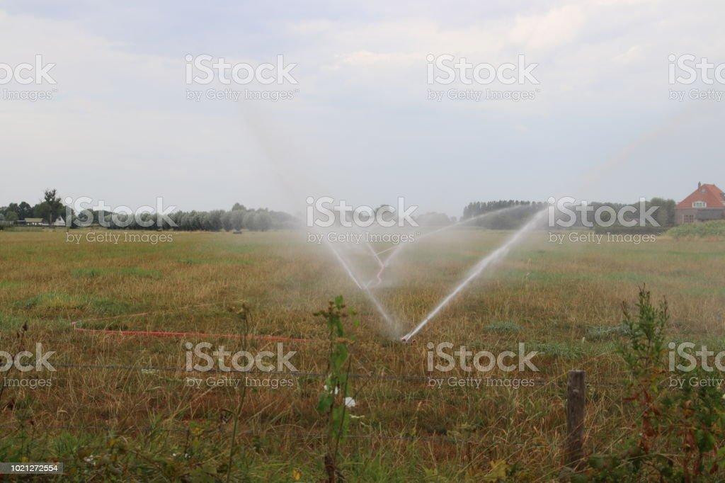 Boeren in Nederland zijn sproeien van water over de weilanden in de droge zomer van 2018 terwijl dit niet is toegestaan door de regering te sparen water foto