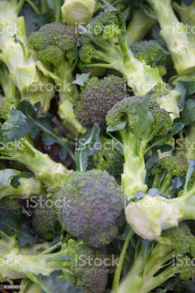Farmer's market broccoli stock photo