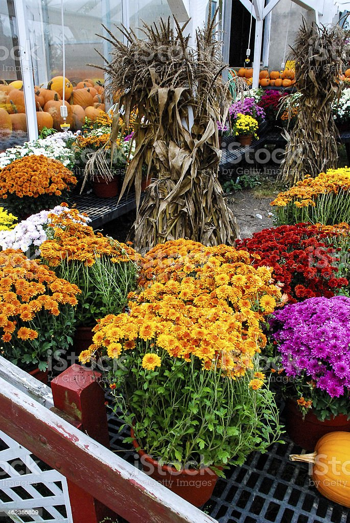 Farmers market Flowers and fall crops East Lyme Connecticut royalty-free stock photo
