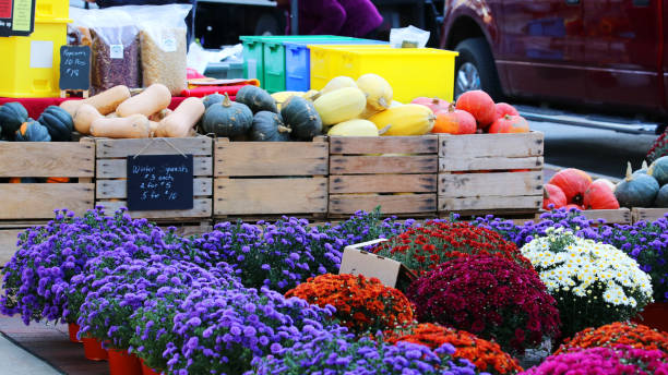 Farmers market goods display. Bright autumn chrysanthemum and boxes with assorter gourds for sale at the farmers market. Agriculture, farming and small business background. Harvest concept. dane county stock pictures, royalty-free photos & images
