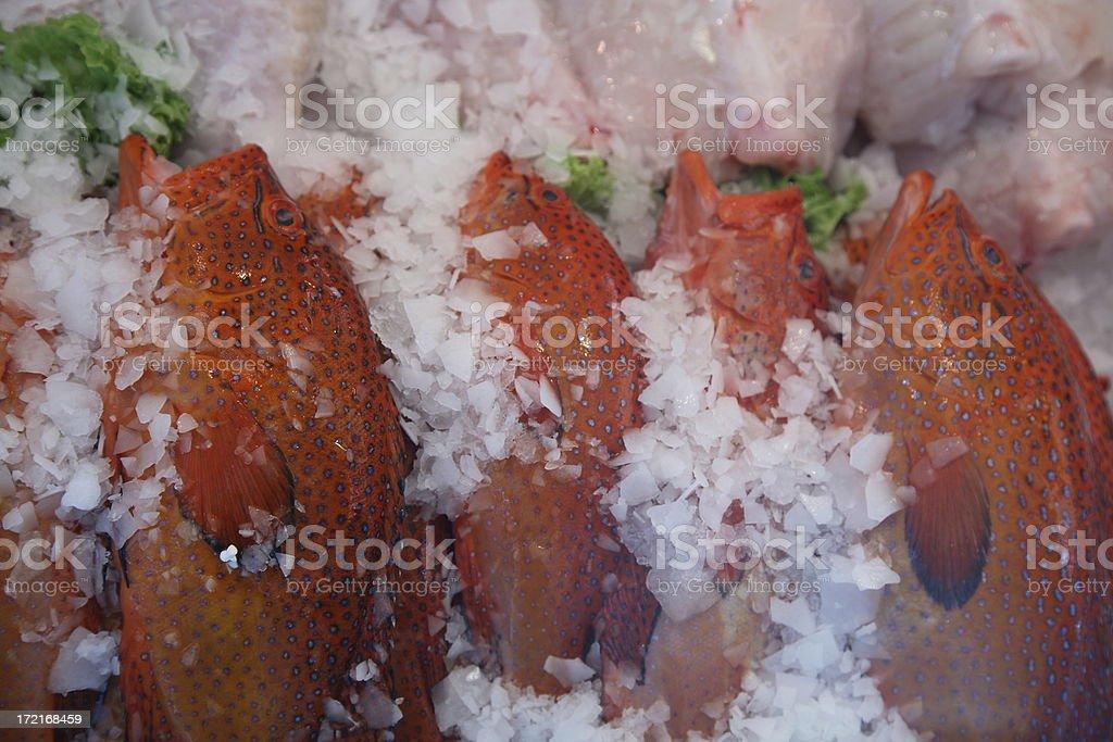 Farmers Market: Grouper royalty-free stock photo