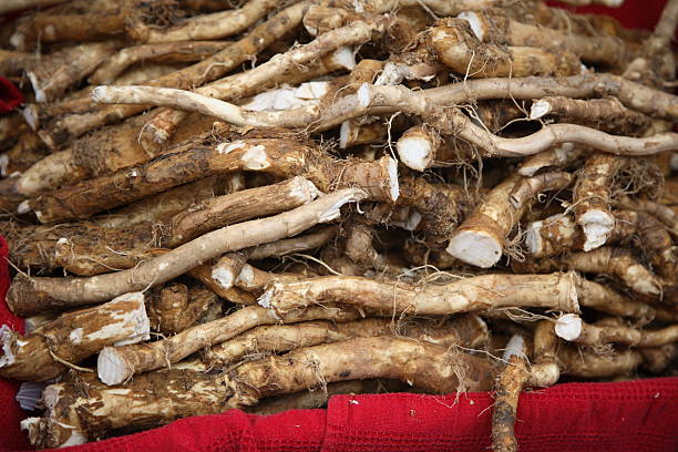 Farmers Market: Horseradish Root Raw radish root for sale at the San Francisco Ferry Plaza Farmers Market. horseradish stock pictures, royalty-free photos & images
