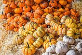 Farmers Market Mini Pumpkins