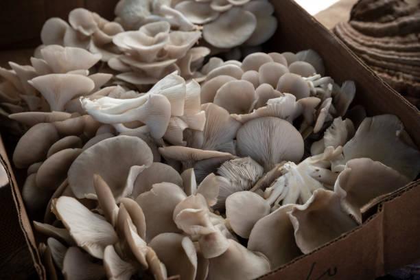 Farmer's Market Mushrooms stock photo