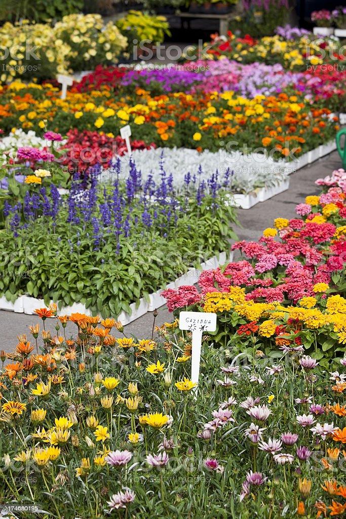 Farmers Market Outdoor Flower Garden Center, Montreal Canada royalty-free stock photo