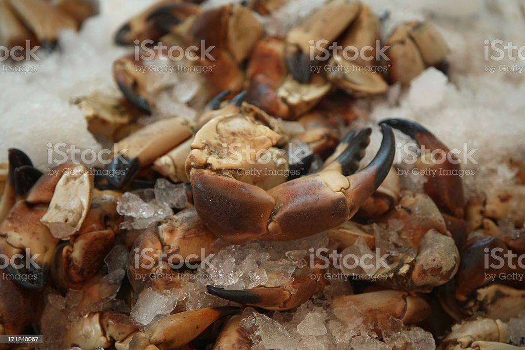Farmers Market: Stone Crab Claws royalty-free stock photo