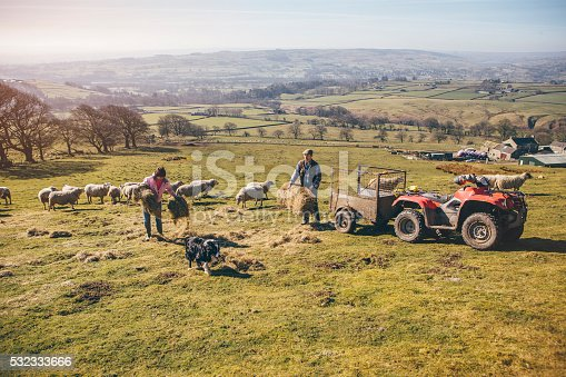 istock Farmers Putting Out Hay for the Sheep 532333666