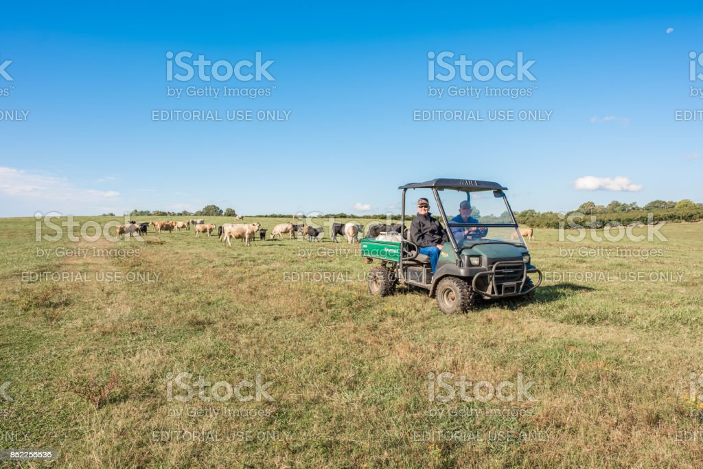 Farmers riding in a field in South Carolina Inman, South Carolina, Sept. 10, 2017: Farmers ride a motorized buggy all terrain vehicle, a Kawasaki Mule, over farmland in late summer, to check on the cows in the pasture. 60-69 Years Stock Photo