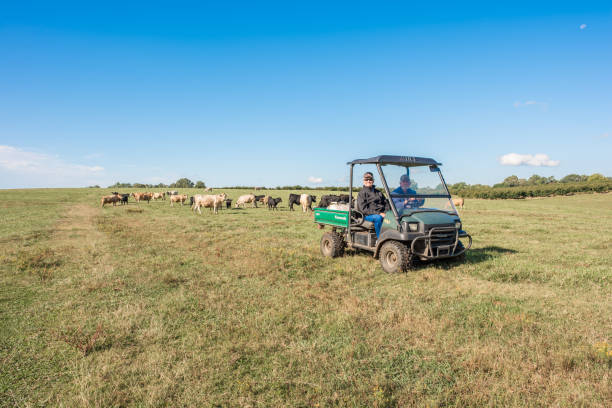 Farmers riding in a field in South Carolina Inman, South Carolina, Sept. 10, 2017: Farmers ride a motorized buggy all terrain vehicle, a Kawasaki Mule, over farmland in late summer, to check on the cows in the pasture. apostate stock pictures, royalty-free photos & images