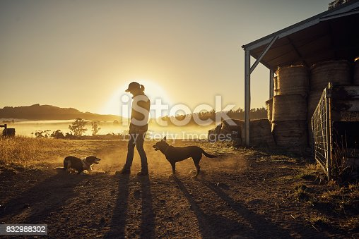 Shot of a young woman playing with her pet dogs on a farm