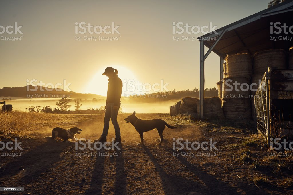 Farmers rise with the sun stock photo