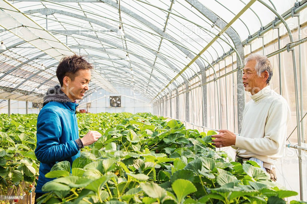 Farmers talking in a greenhouse stock photo