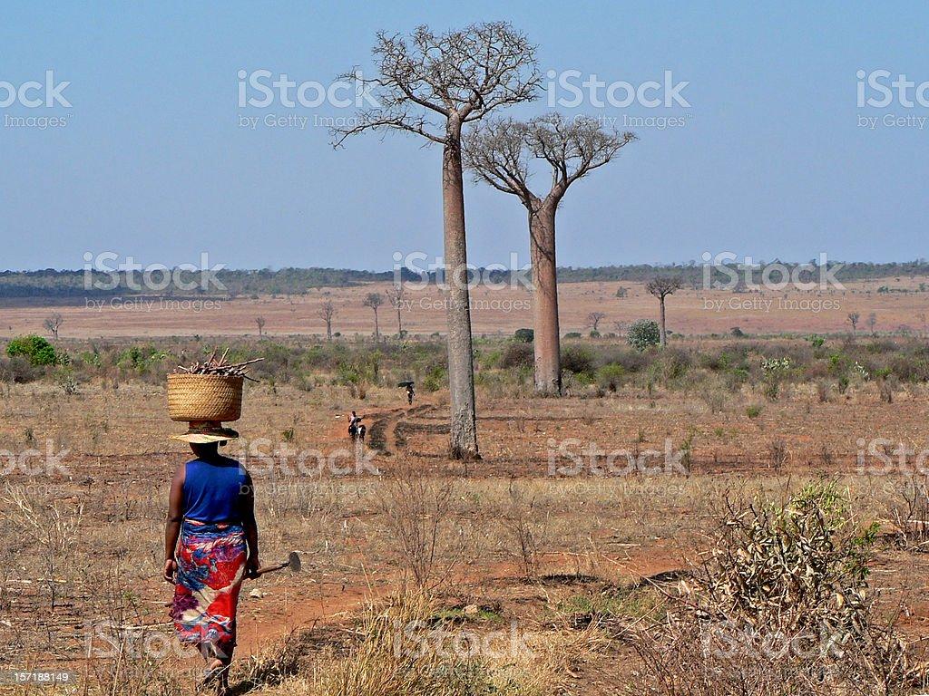 farmers with Baobab trees in Madagascar foto