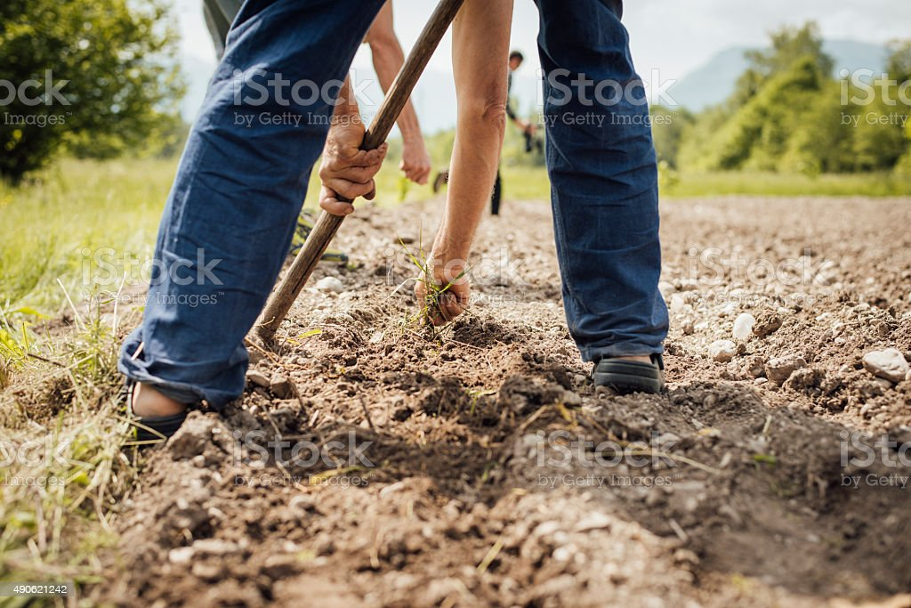 Farmers working in the fields stock photo