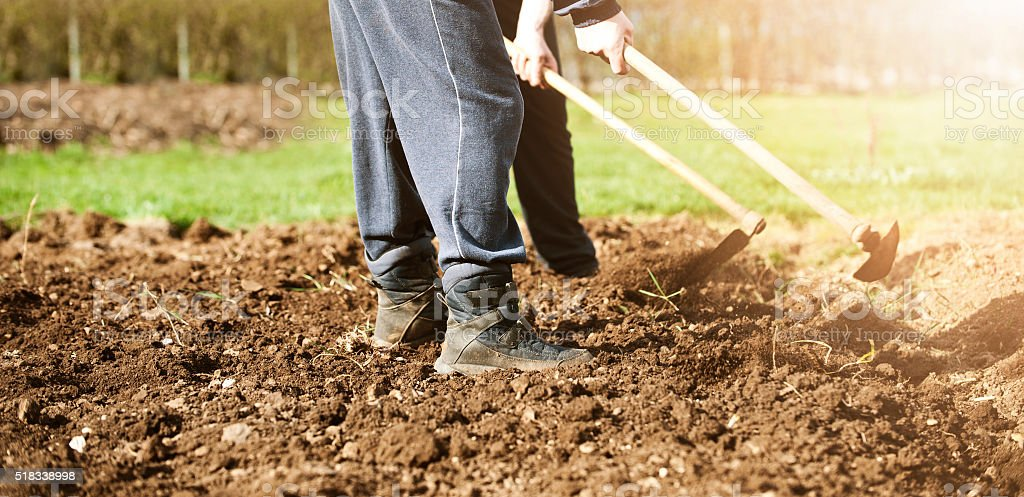 Agricoltori che lavorano nel settore - foto stock