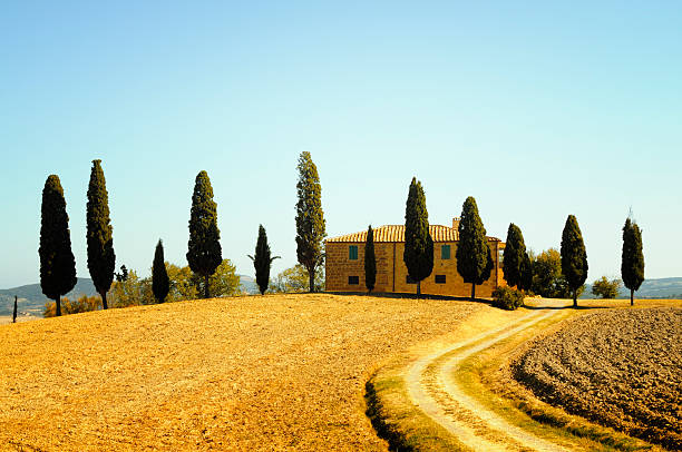 farmhouse and cypress trees - cypress tree stock photos and pictures