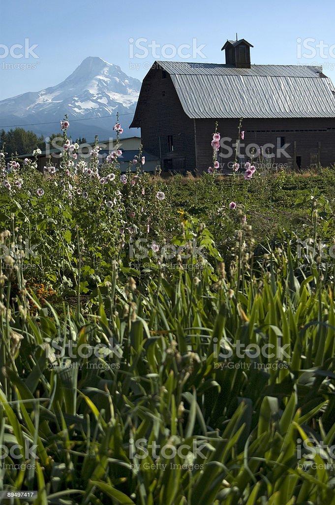 Farmhouse and Mt. Hood royaltyfri bildbanksbilder