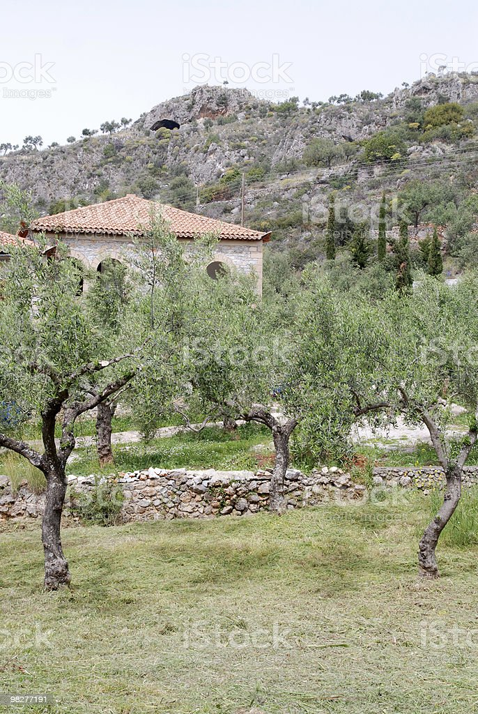 농가 및 올리브 나무 royalty-free 스톡 사진