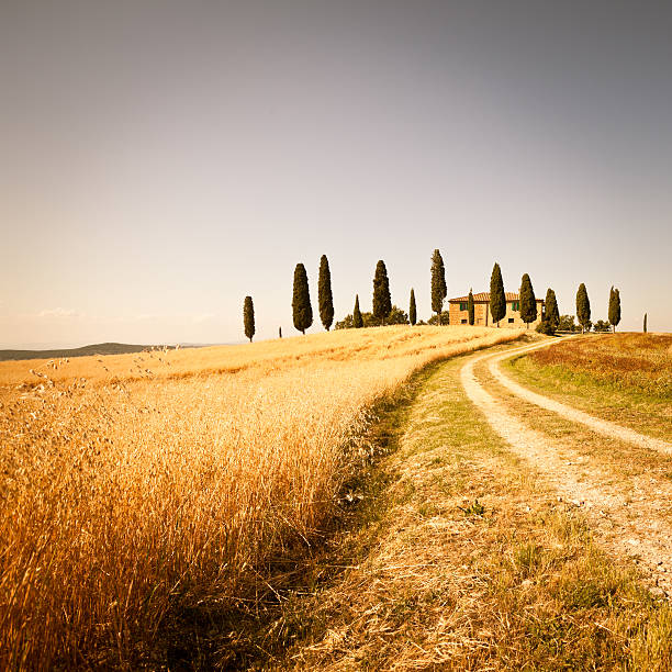 Farmhouse and Rural Road in Val d'Orcia, Tuscany Beautiful landscape in Tuscany pienza stock pictures, royalty-free photos & images