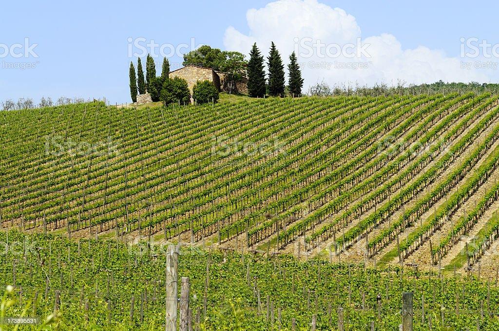 Farmhouse and Vineyard in Springtime,Tuscany royalty-free stock photo
