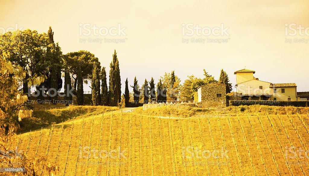 Farmhouse and Vineyard,Tuscany,Italy royalty-free stock photo