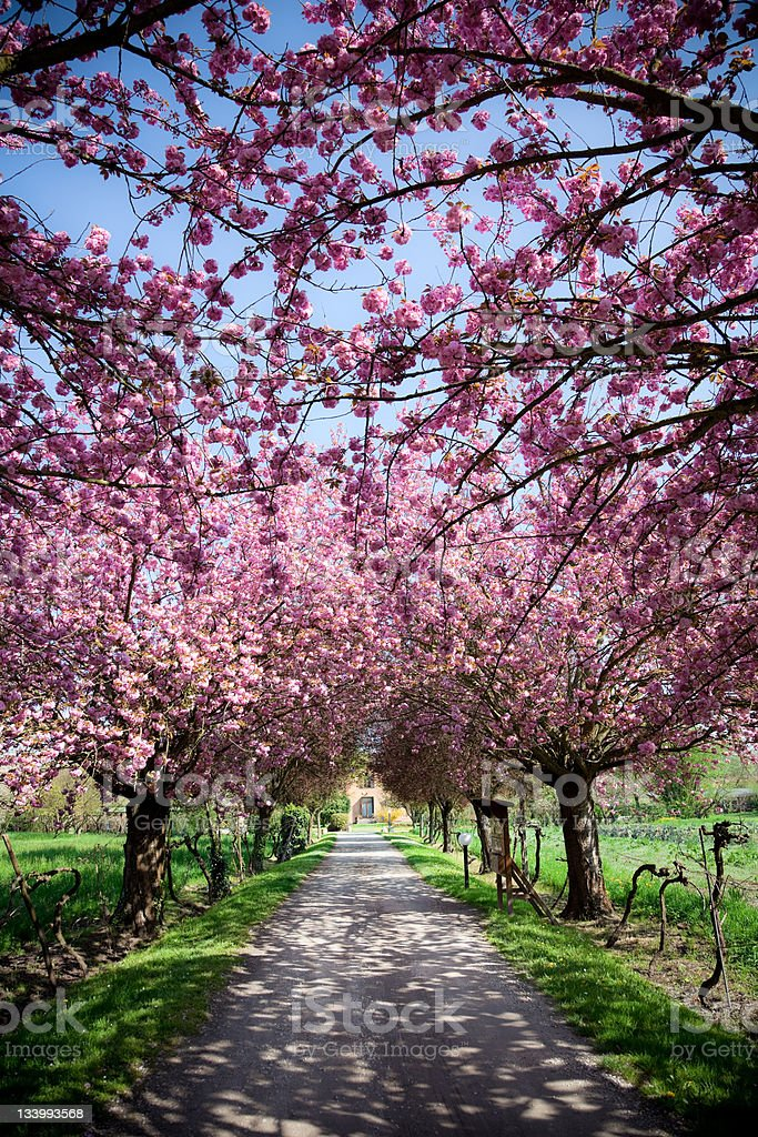 Farmhouse during spring with vivid pink flowers royalty-free stock photo