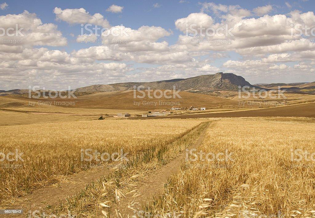 Masseria in cornfield foto stock royalty-free