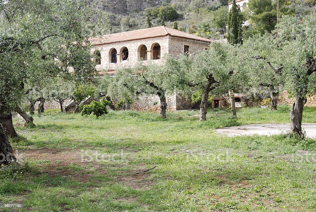 farmhouse in the middle of an olive tree garden royalty-free stock photo