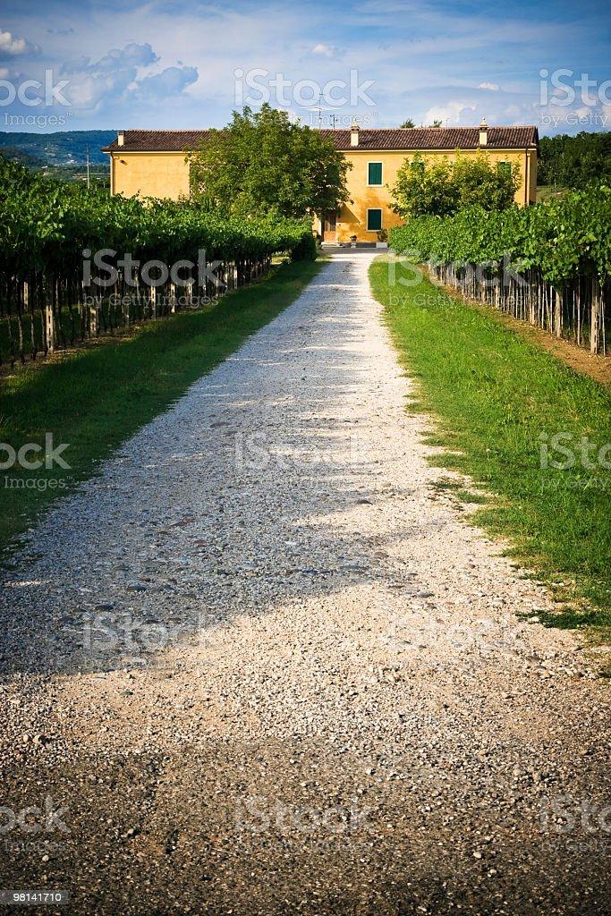 농가 in the vineyards royalty-free 스톡 사진