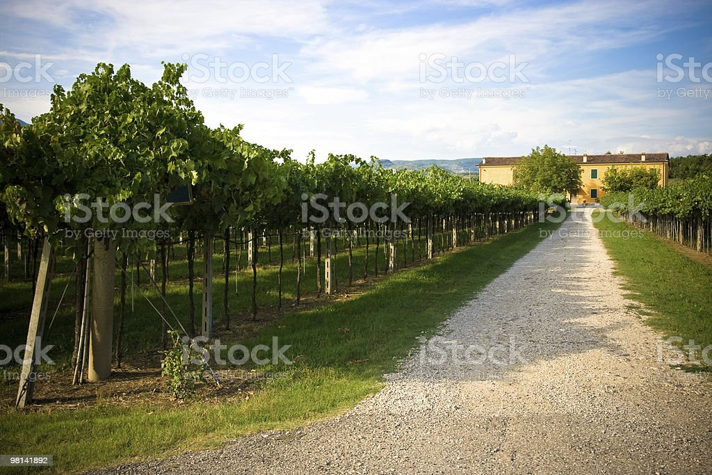 Farmhouse in the vineyards royalty-free stock photo