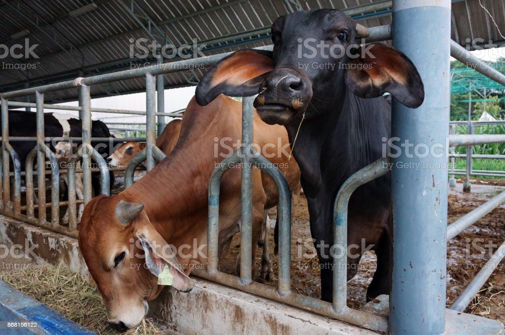 farming and animal husbandry concept stock photo