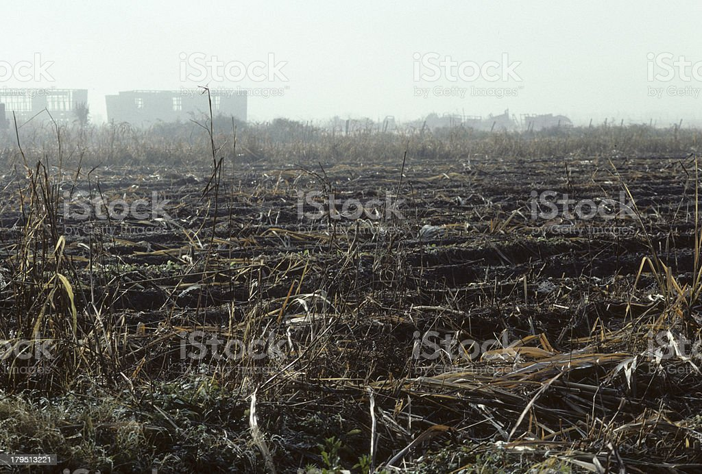 Farming and harvesting sugar cane in Louisiana, USA. royalty-free stock photo