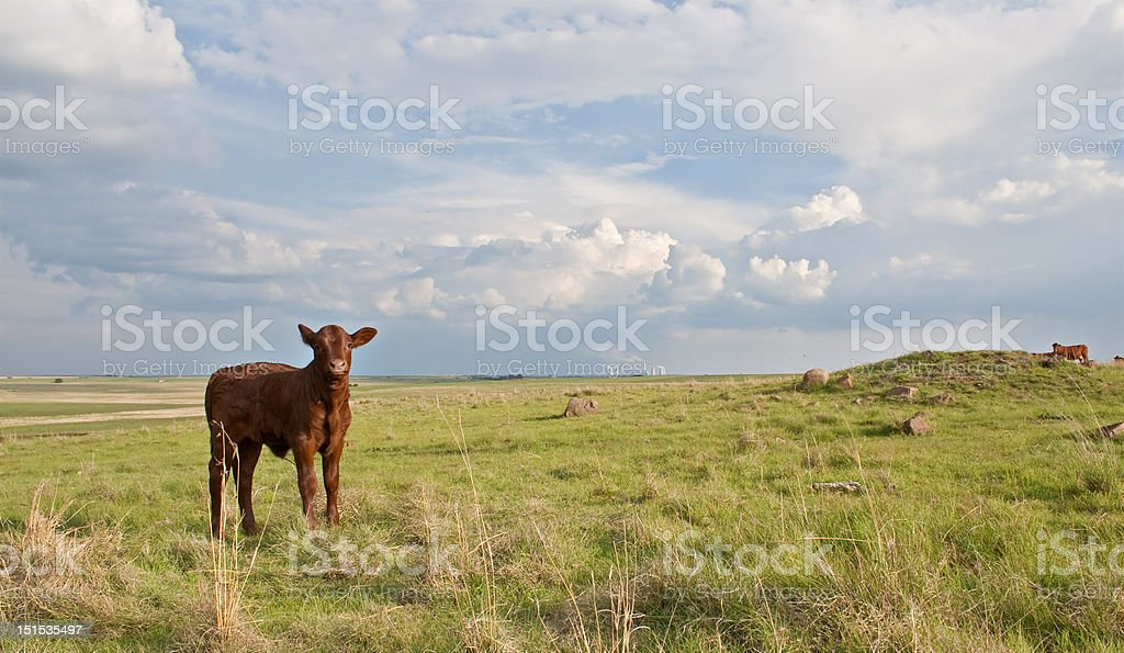 Farming and Industry royalty-free stock photo
