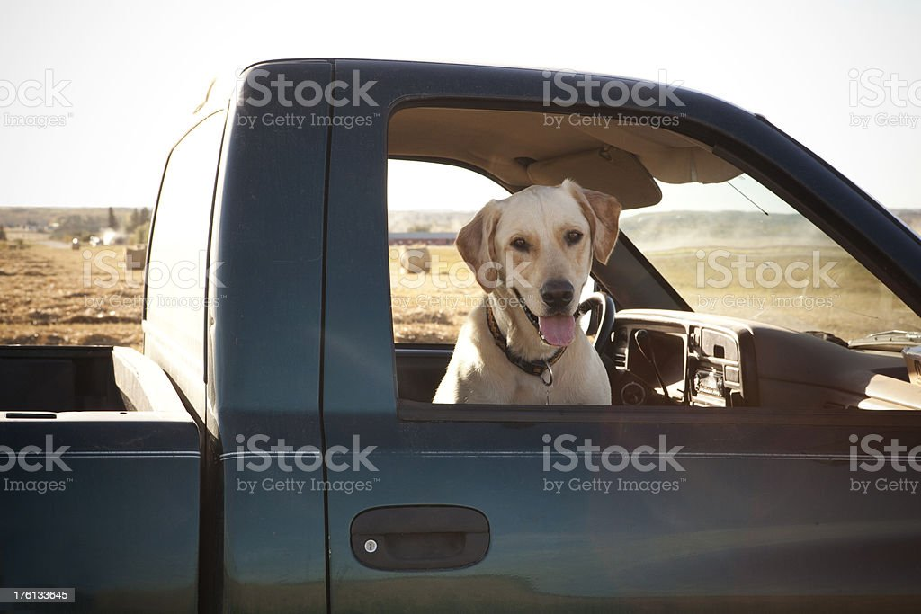 Farming Dog stock photo