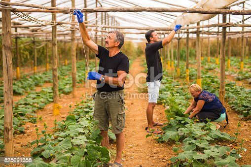 istock Farming, gardening, agriculture and people concept - Family business. Family Working Together In Greenhouse 825691358