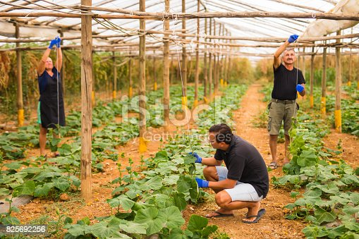 istock Farming, gardening, agriculture and people concept - Family business. Family Working Together In Greenhouse 825692256