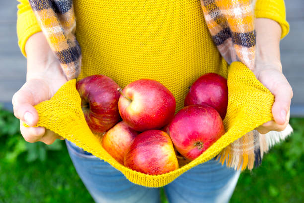 Farming, gardening, harvesting, fall and people concept - woman with apples at autumn garden stock photo