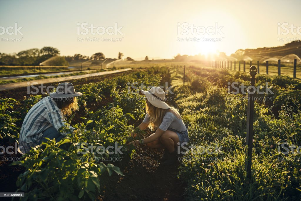 Farming isn't a job, it's a calling stock photo