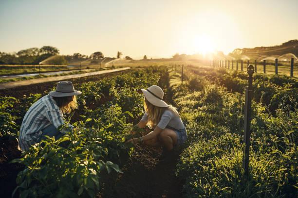 La agricultura no es un trabajo, es un llamado - foto de stock