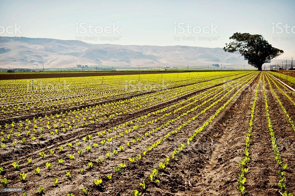 La agricultura  - foto de stock