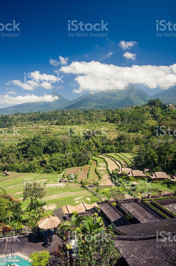La Agricultura Arroz Terrazas En Bali Indonesia Foto De