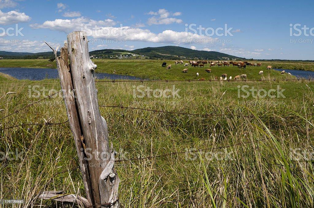 Farming Scenic royalty-free stock photo