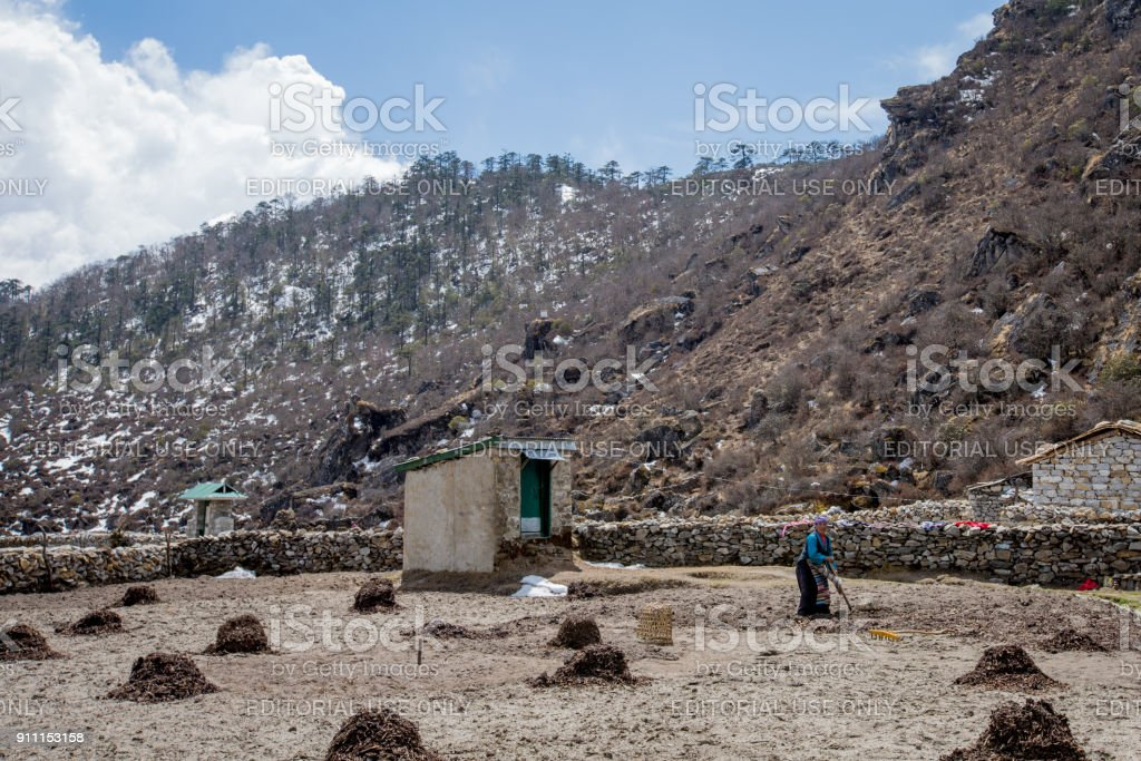 Farming woman working in barren field at Dingboche, Nepal stock photo