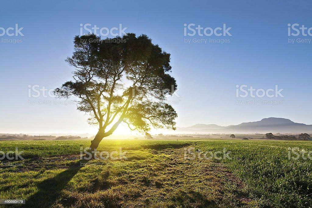 farmland field royalty-free stock photo