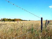 istock Farmland in Autumn behind barbwire fence 172186200